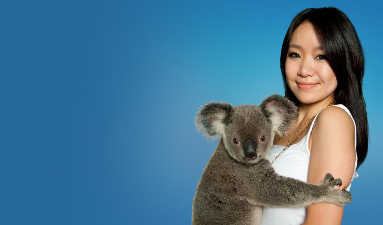 koala-cuddle-desk.jpg