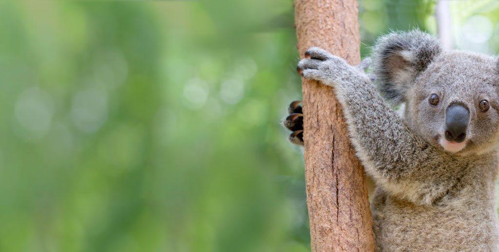 Things to do Gold Coast, Activities   Currumbin Wildlife