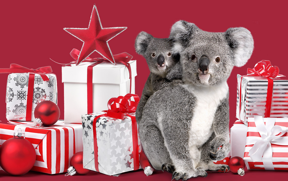 12 Christmas Gift Ideas for Animal Lovers :: Currumbin Wildlife ...