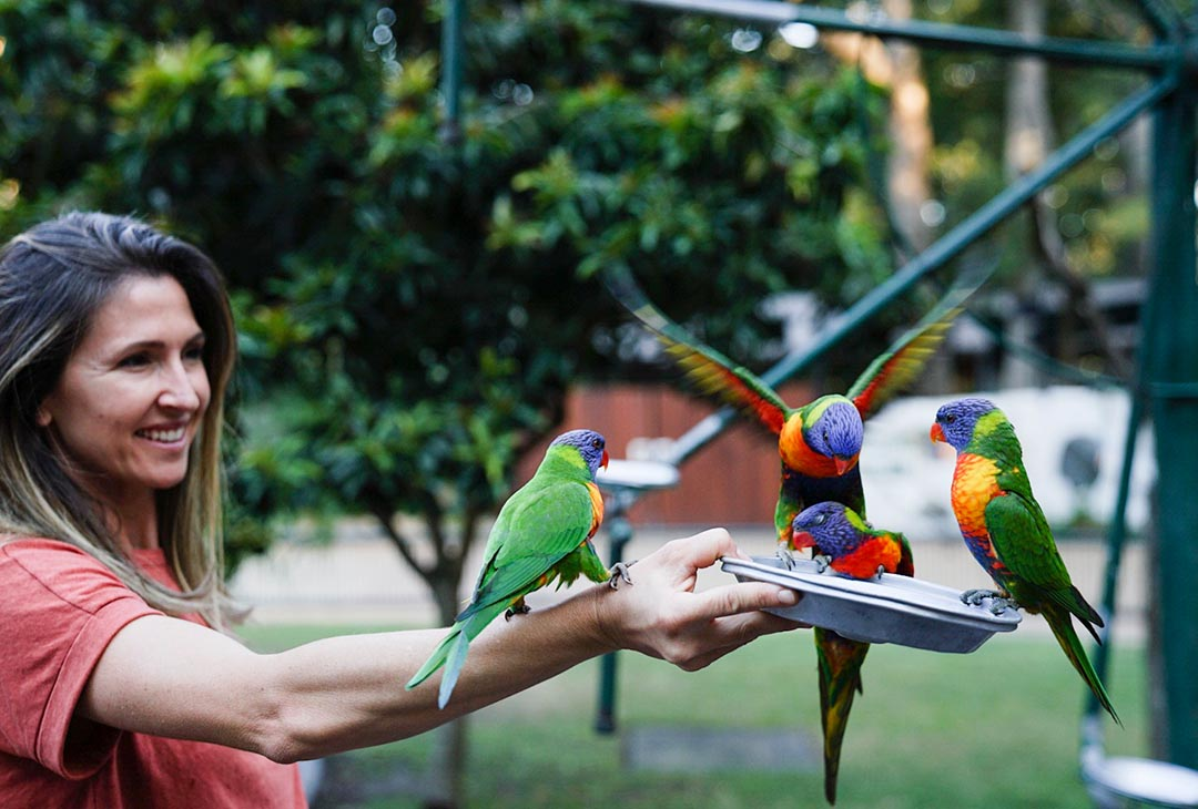 lorikeets blog post free things to do goldcoast.jpg