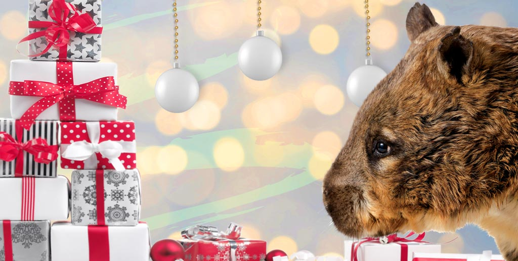Christmas Giving.Give The Gift Of Giving Back This Christmas Currumbin