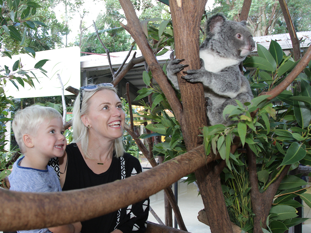 Koala_bts_encounter_mobile_1024_x_768.jpg