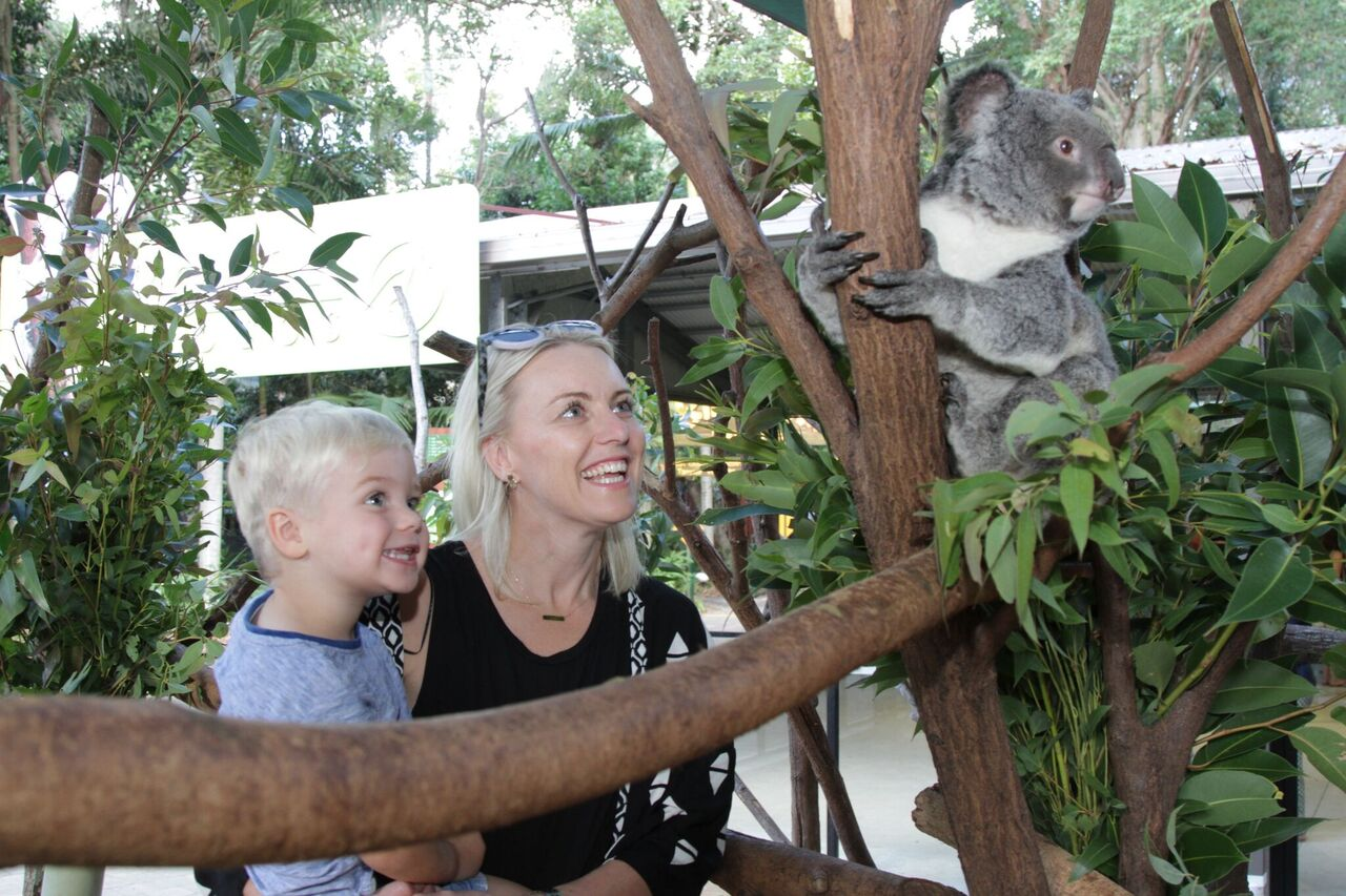 koala-sanctuary-currumbin.jpeg