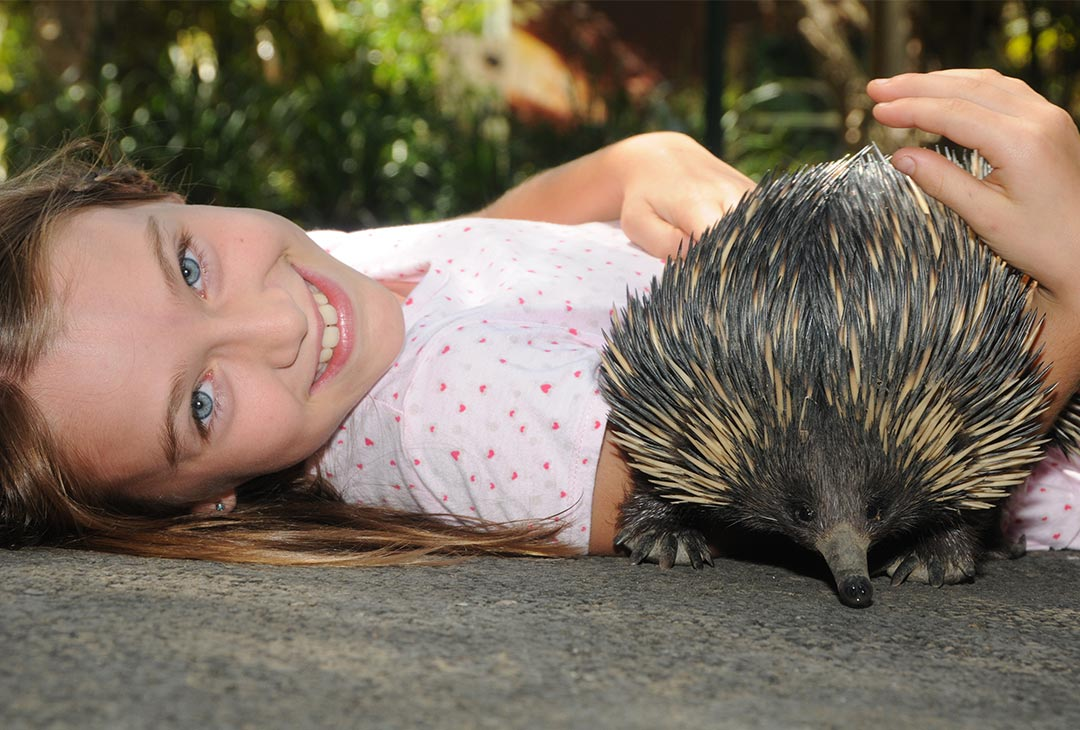 Echidna-Encounter.jpg