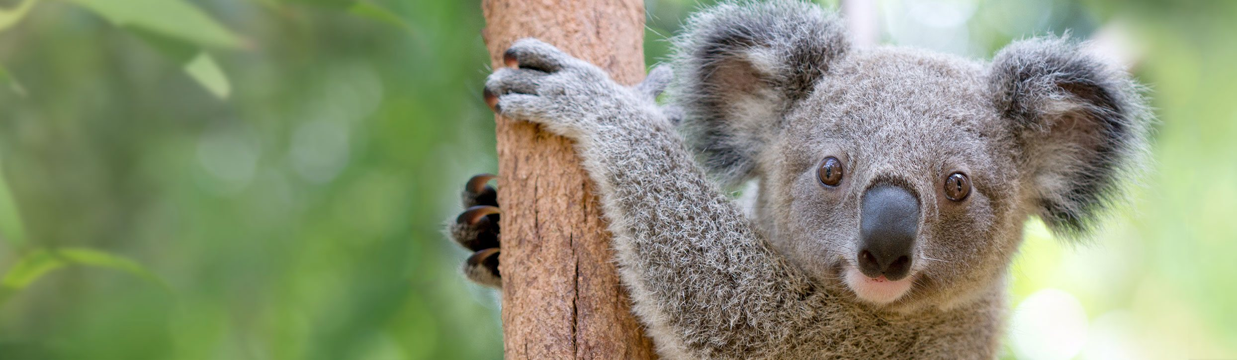 how to get to the currumbin sanctuary
